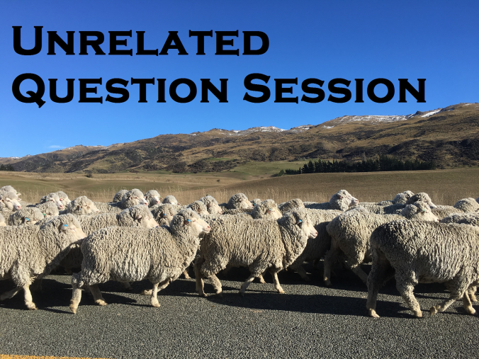 UQS Sheep.png